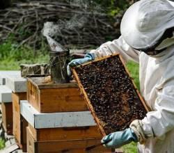 Дотація для бджолярів, інформацію подано до ОДА